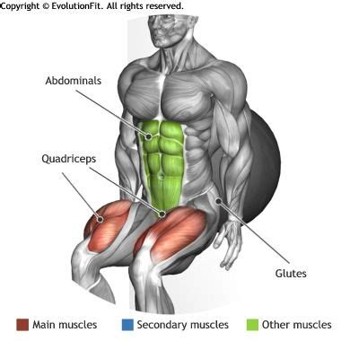 quadriceps fitball wall squat exercise