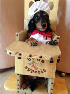 bailey chairs for dogs with canine megaesophagus www