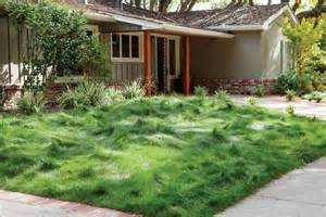 Ranch House Landscaping Ideas For Front Yard - no mow lawns spring lake garden design