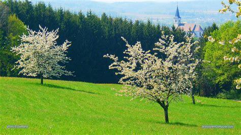 immergrüne bäume für den garten die 70 besten hintergrundbilder fr 252 hling