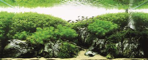 most beautiful aquascapes かなり美しい水草水槽の画像 とても水槽の中とは思えない水草レイアウト 水草水槽の美しい画像 作り方やレイアウト