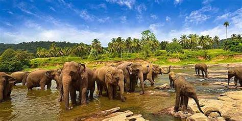 taman nasional  kambas atraksi gajah sumatera