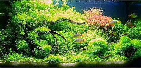 120 liter aquarium 4107 wei 223 er quarzsand f 252 r s aquarium aquarium forum