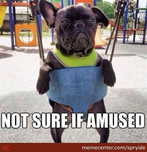 Grumpy Dog Meme - grumpy dog memes best collection of funny grumpy dog pictures