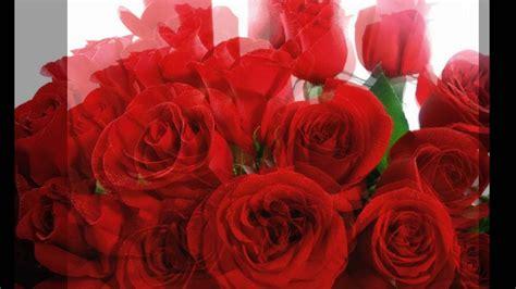 imagens de flores e rosas bruno e marrone choram as rosas youtube