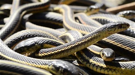 if you re scared of snakes don t this