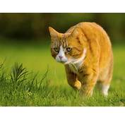 Wallpapers Cat Hunter