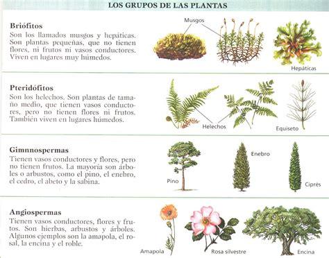 olguchiland las plantas ii las plantas y el co 2 la clasificaci 243 n tax 243 nomica de