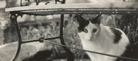 Cat In The By Ernest Hemingway Essay by What Is The Theme Of Quot Cat In The