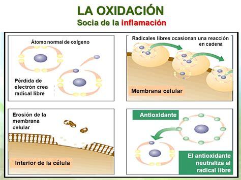 imagenes de radicales libres y antioxidantes radicales libres y antioxidantes on emaze