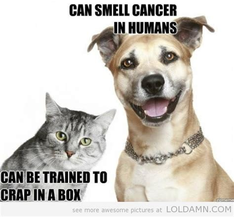 cats vs dogs pictures photos jokes cats vs dogs animals