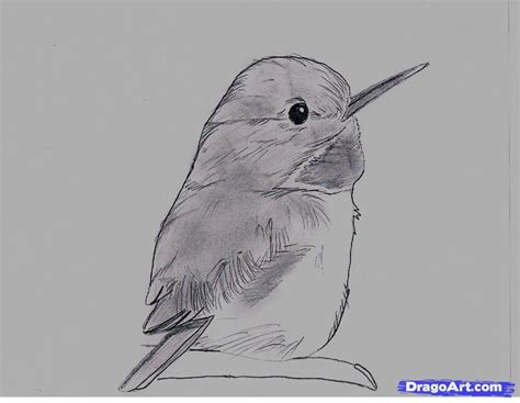 tody bird coloring page how to draw a cuban tody step by step birds animals