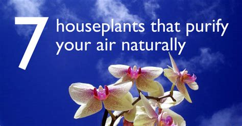 Indoor Plants No Sun 7 indoor plants that purify the air around you naturally