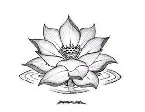 Drawing A Lotus Flower Best 20 Lotus Flower Drawings Ideas On Lotus