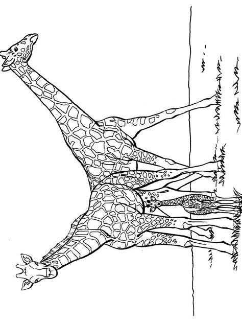 christmas giraffe coloring pages christmas giraffe page coloring pages