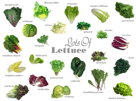 different type of leafy vegetable with name types of lettuce with pictures and names search gardening lettuce vegetables
