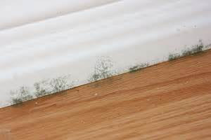 buying a house with mold problems questions to ask before buying a home best pick reports