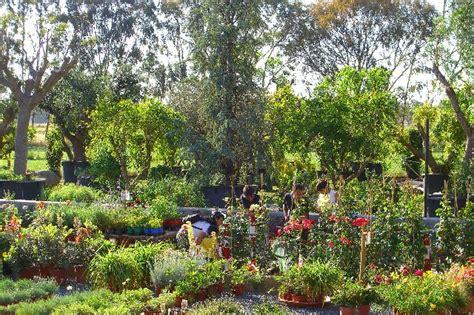 armeni giardini presso l escusivo vivaio centro giardinaggio punto