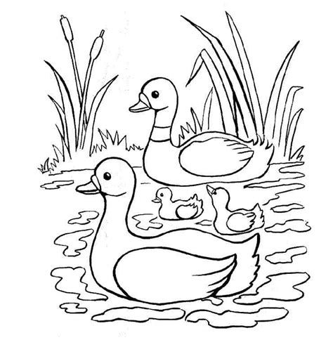 coloring pictures of ducks az coloring pages