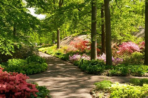 Botanic Gardens Nyc Azalea Garden The New York Botanical Garden Office Photo Glassdoor Co In
