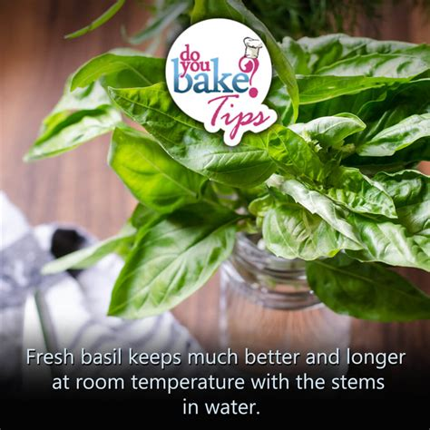 Is Room Temperature Water Better For You by Fresh Basil Do You Bake