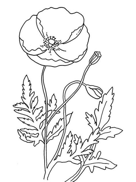 Remembrance Day Poppy Coloring Page Coloring Home Poppy Colouring Pages