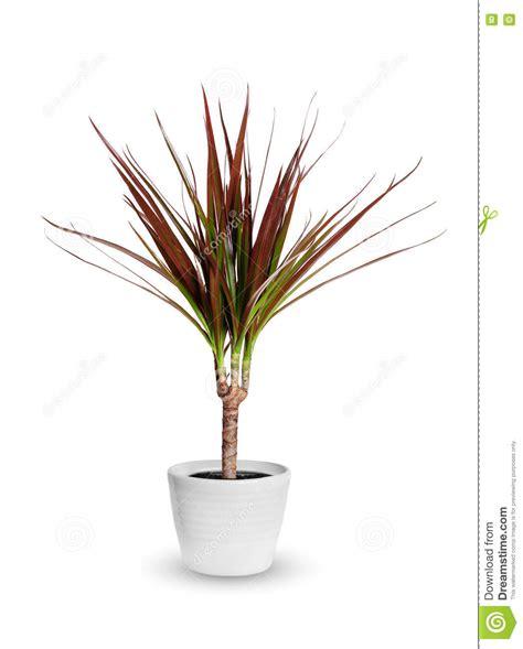 vasi per piante da interno vasi per piante da interno moderni cool per diventare