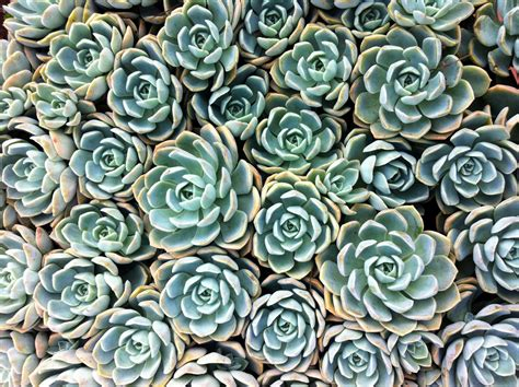 succulent facts facts about succulents things you don t about