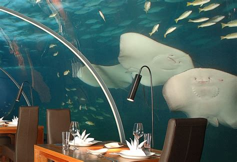 ithaa undersea restaurant underwater ithaa restaurant maldives world for travel