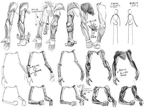 drawing legs anatomy torso life drawing how to draw figure