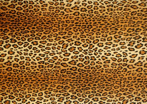 pattern texture library texture leopard fabric fabric lugher texture library