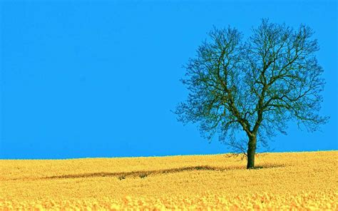 Tree Ppt Background Powerpoint Backgrounds For Free Nature Backgrounds For Powerpoint