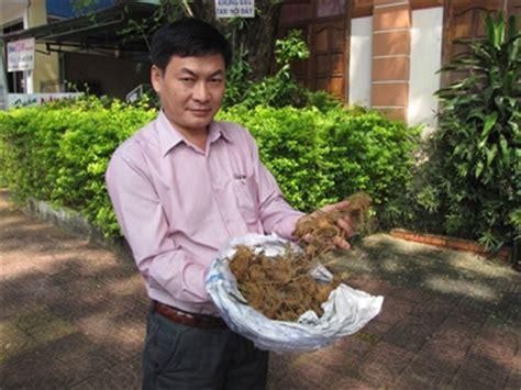 Ginseng Jawa Per Kilo scientists fear ngoc linh ginseng may get exhausted news vietnamnet