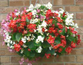White Urn Planters by Hanging Basket Types