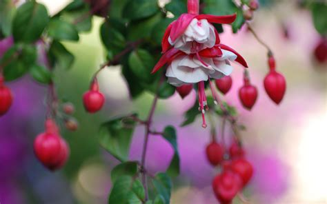 wallpaper flower with heart heart flowers wallpapers hd wallpapers id 5738