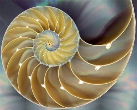 spiral pattern found in nature nature s geometry jdl reflections