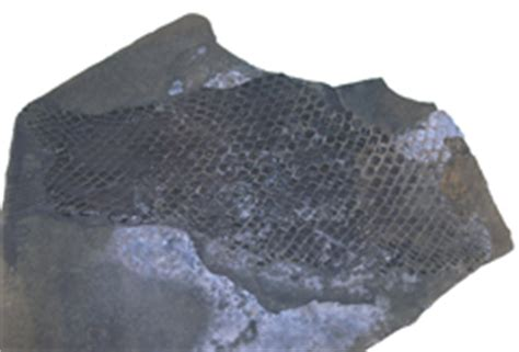 Tracce Sale 2 sala fossili