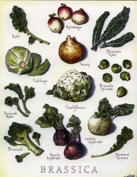 Garden Of Thyroid Root Wellness Brassica And Thyroid