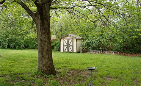 backyard plants and trees tree decision keep em or cut em