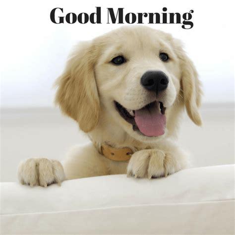 by good morning golden retriever cute puppy pictures of good morning good morning