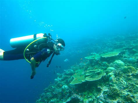 maldives dive top 10 things to do in maldives planned traveller travel