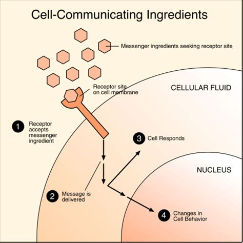 cell communication diagram lalpekin cell communication chapter 11