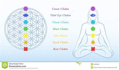 fiore della donna fiore della donna di chakras di descrizione di vita