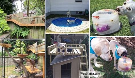 Backyard Experiments by Diy Backyard Projects And Tips For Your Pets