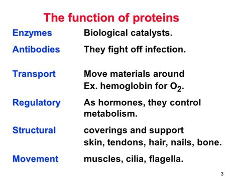 protein 4 functions proteins the function of proteins amino acids the peptide