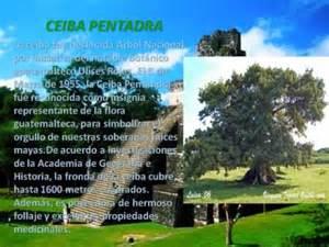 S 237 mbolos patrios de guatemala youtube