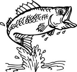 Bass Fish Coloring Pages cathing bass fish coloring pages best place to color