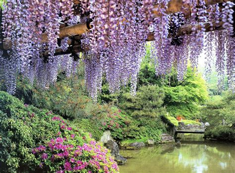 Flower Garden Japan Wisteria Rakusuien Garden Kyoto Flowers Garden Gardens Japan Nature Photography Wisteria