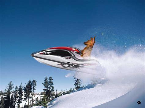 dogs on skis seen a dachshund on a jet ski motley news