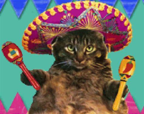 cat sombrero gif cat sombrero mexican discover & share